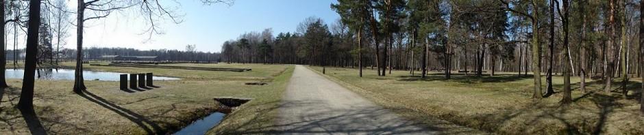 Vue du Birkenwald (Bois de bouleaux) à Auschwitz-Birkenau (photo Olivier QUERUEL - mars 2011)